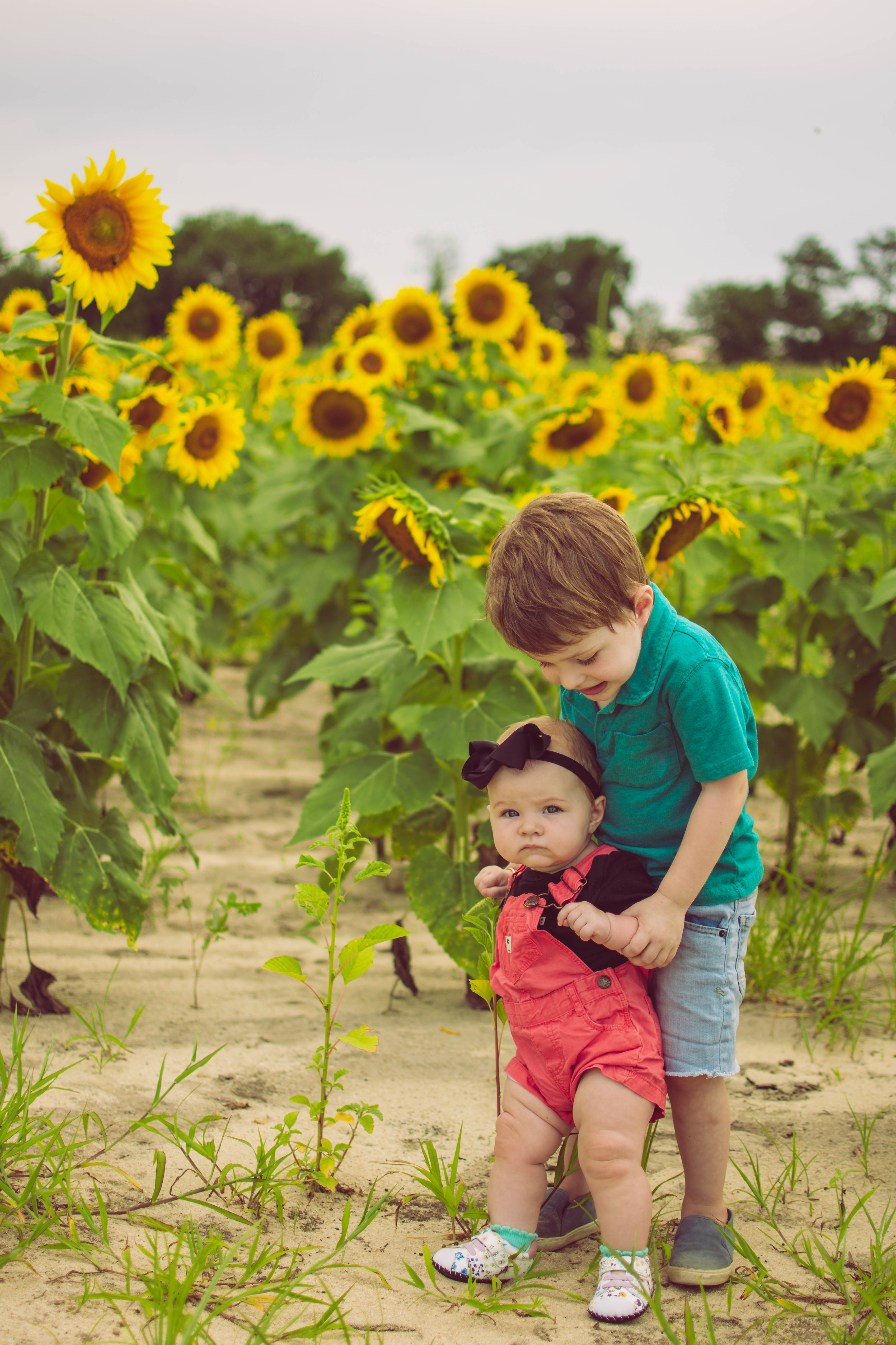 sunflower field photos
